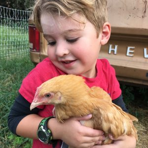 child-and-chicken
